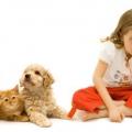 Алергія на кішок у дітей: лікування